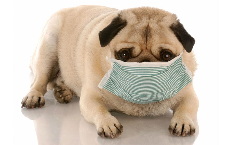 Coronavirus, Your Pets, and What You Need To Know