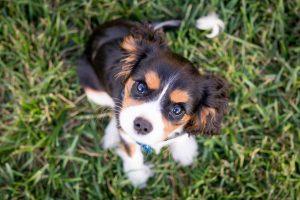 puppy sit