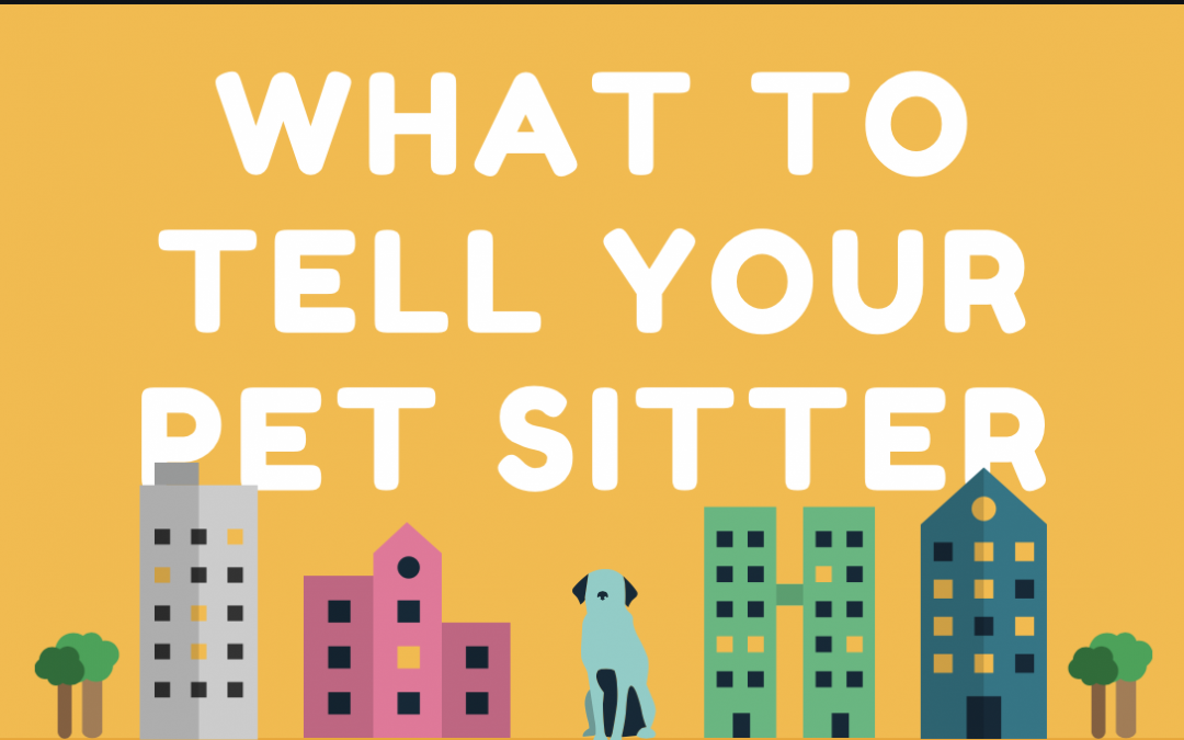 What to Tell Your Pet Sitter BEFORE You Head Out of Phoenix