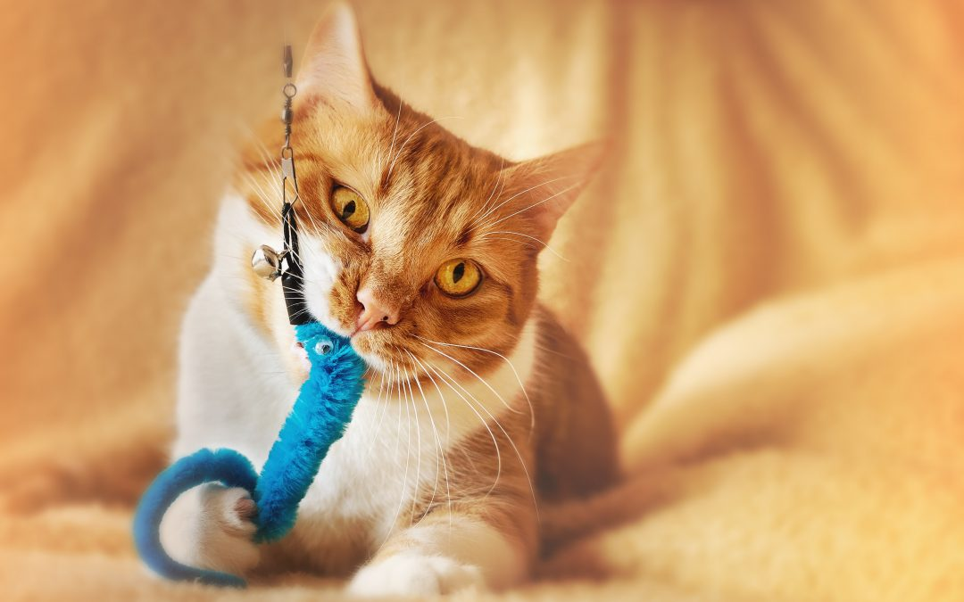 5 Games to Play with Your Cat (That aren't a laser pointer)